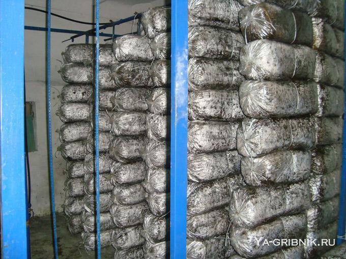 Выращивание грибов вешенка домашних условиях